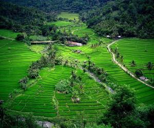 Bali: Kiedy jechać