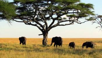 Park Narodowy Górnego Nigeru
