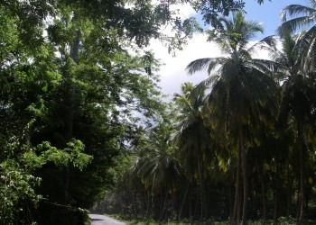 Saint-Joseph (Dominika)