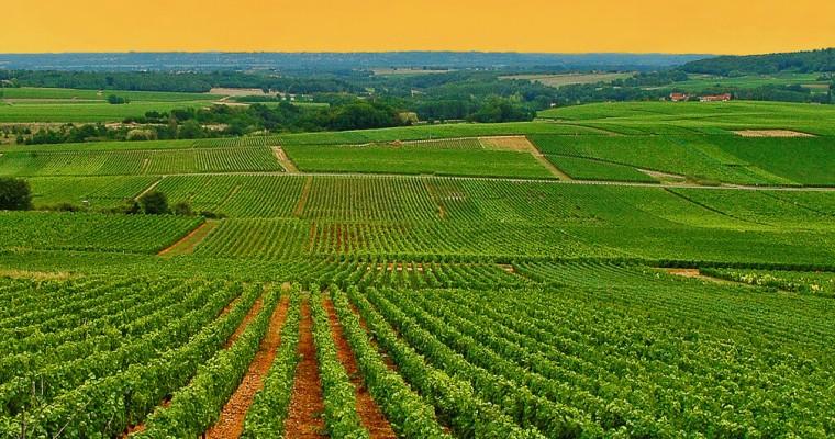 Burgundia